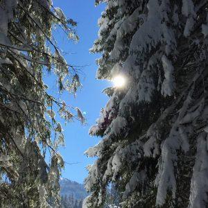 Sun Trees & Snow